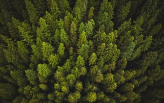 View of a forest from above